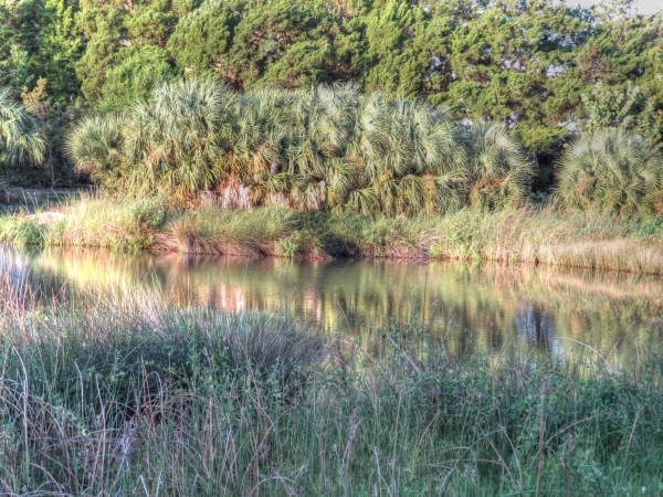 nature reserve morning_tonemapped