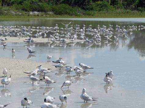 birds in flood water mass shower