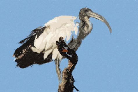 sacred ibis artwork
