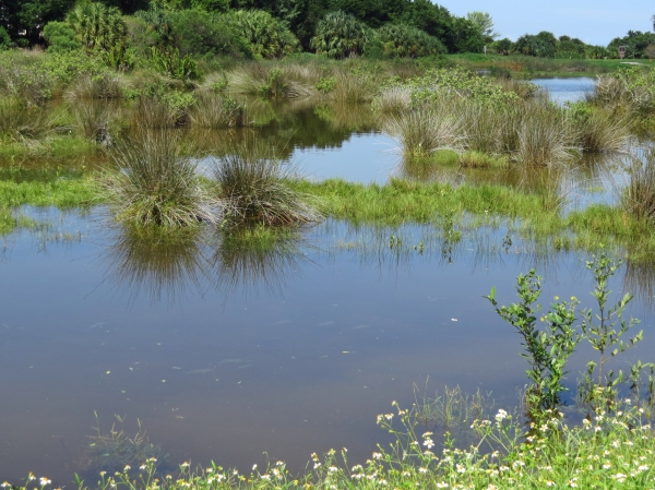 salt marsh after rain flood