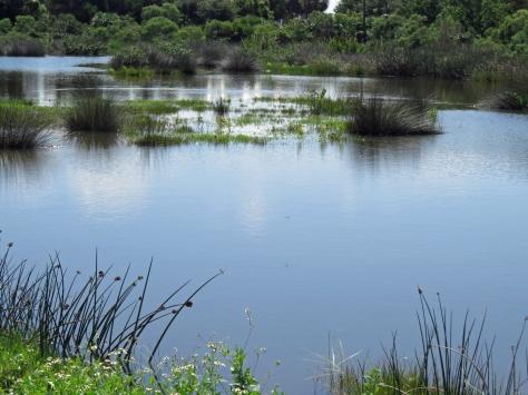 salt marsh after rains
