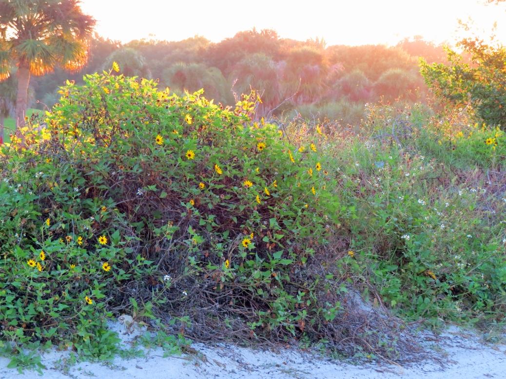 flowers at sunrise