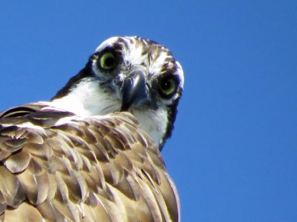 osprey Florida, Sand Key