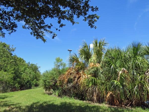 papa ospreys nest from afar