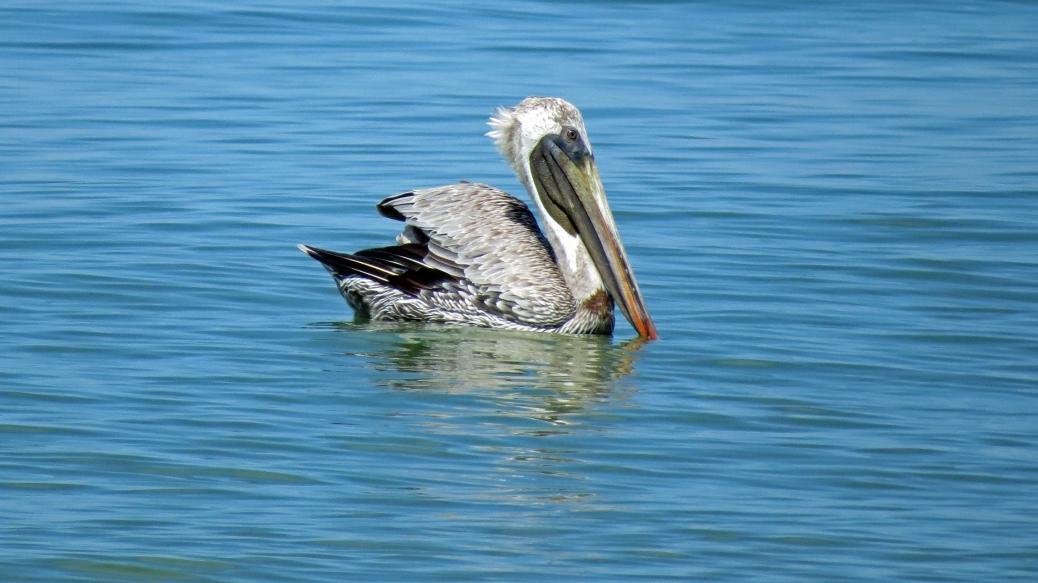 pelican 3 16x9