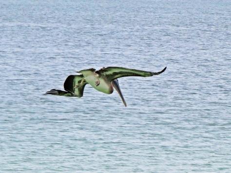 pelican dive aa