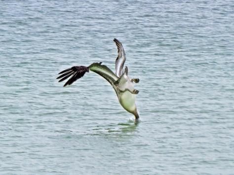 pelican dive style 11