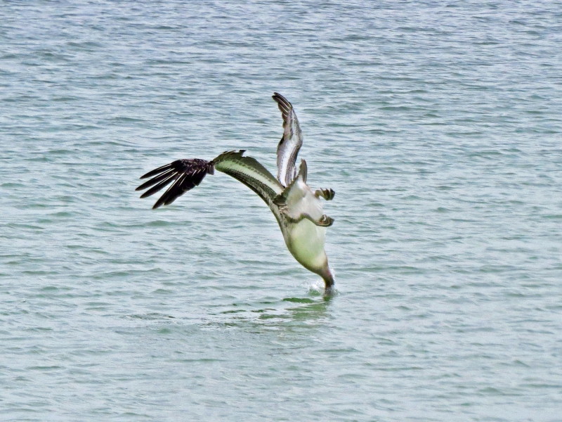 pelican dive style 11