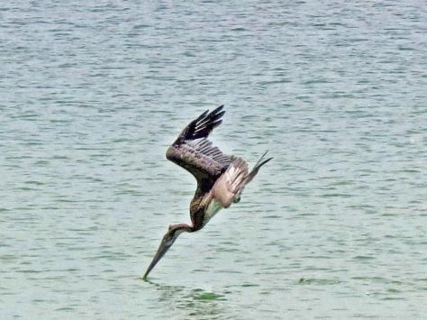 pelican dive style 22