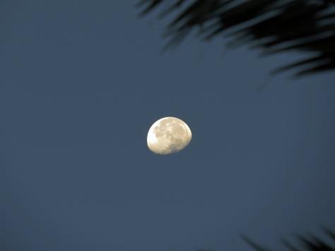 sunrise moon 2