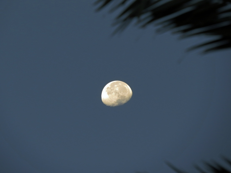 sunrise moon 2