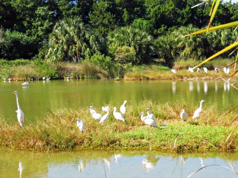 migratory birds in Sand Key Park Salt Marsh