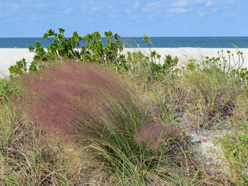 beach grass fall colors