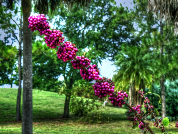 Color popping seed pods in the park...
