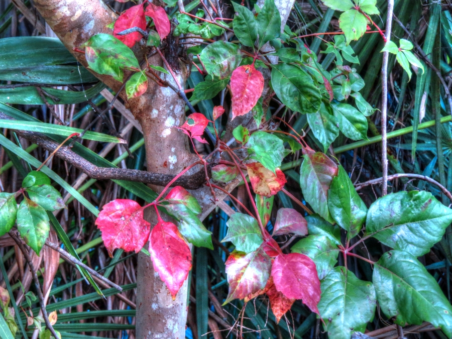 Fall colors in our garden...