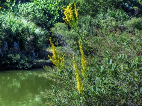 Wild flowers in the salt marsh