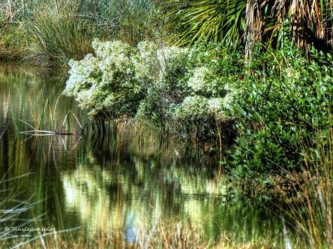 salt marsh flower tree nov 29