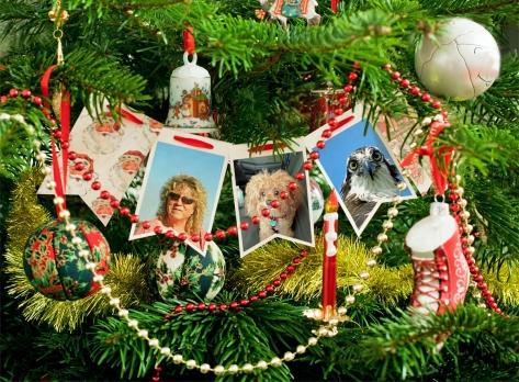 Happy Holidays from Tiny Bumble and Papa Osprey Photofunia app