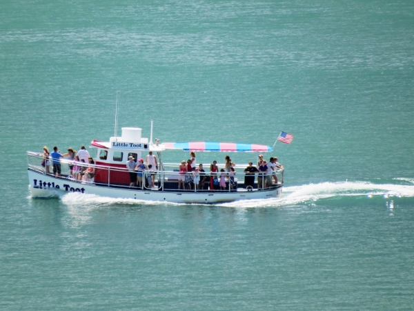 Clearwater Marina Dolphin Tours