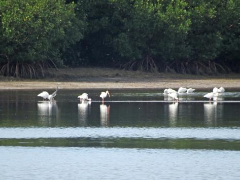 birds on the sand spit beach HMI