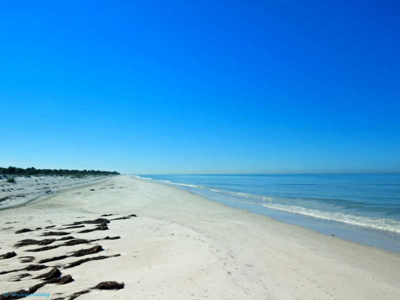 Beach on Caladesi Island, voted America's best beach a few years ago