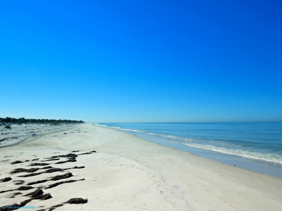 caladesi island beach by tiny