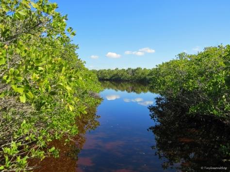 caladesi island pond by tiny