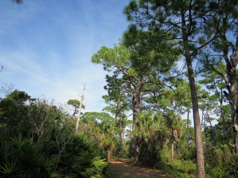 HM osprey trail
