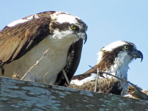 Papa and mama in the nest...forgiving
