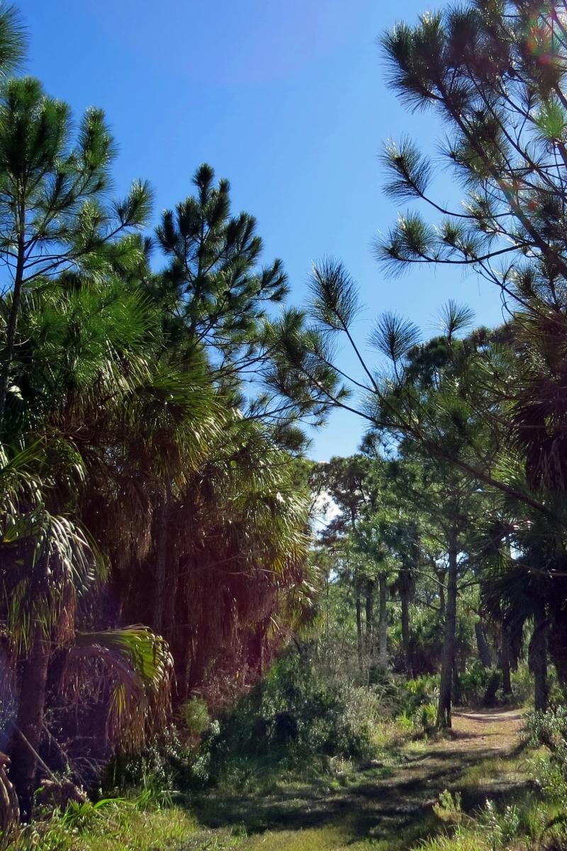 caladesi island nature trail dunedin florida