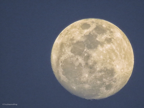full moon clearwater florida