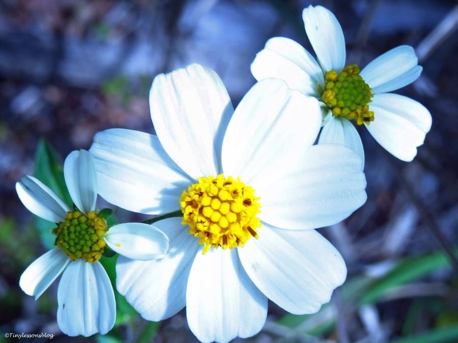 spring flowers in salt marsh