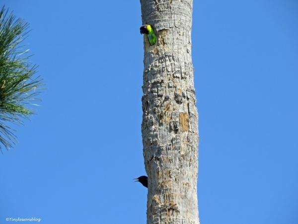 palm trunk condo update