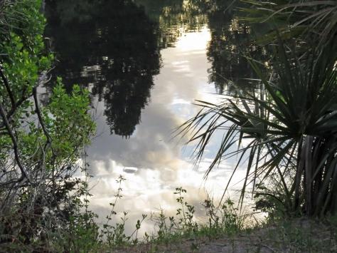 reflections in salt marsh at sunrise