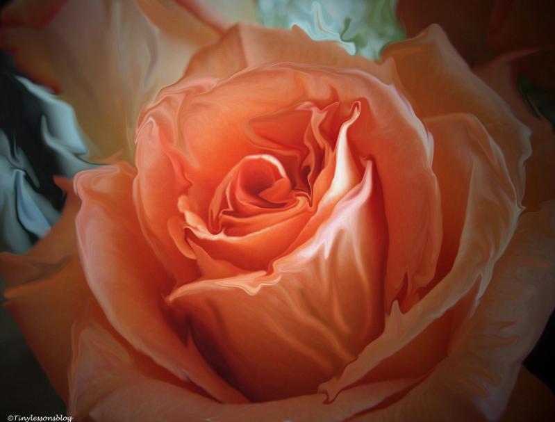 rose L
