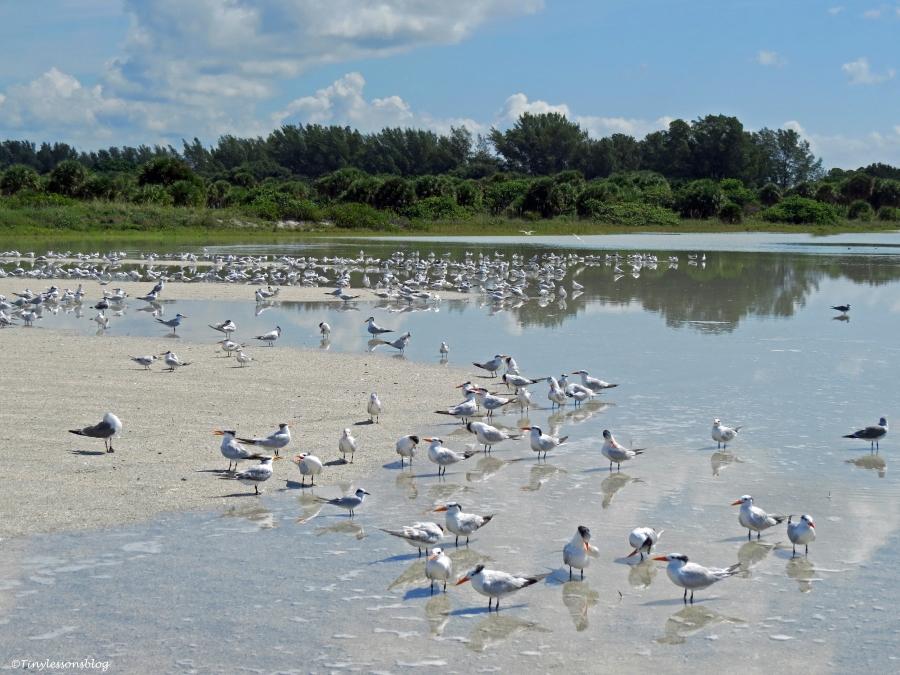 ...and the birds get a rainwater bath on the flooded beach.