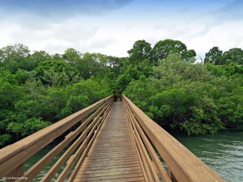 Boardwalk in McGough Nature Park