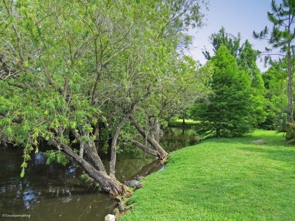 McGough Nature Park