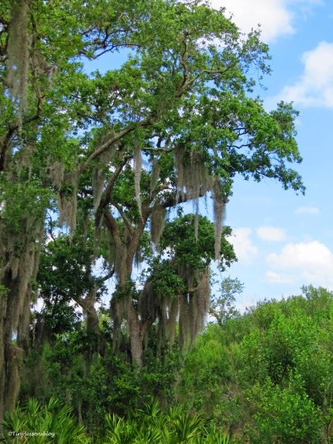 Oak trees in McGough Nature Park