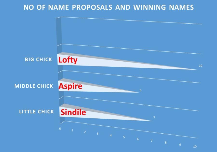 osprey chick names