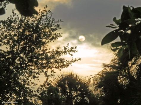 sunrise in the salt mars Sand Key Park Clearwater Florida