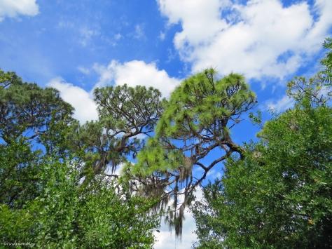 trees 2 in McGough Nature Park