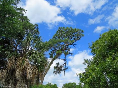 trees in McGough Nature Park