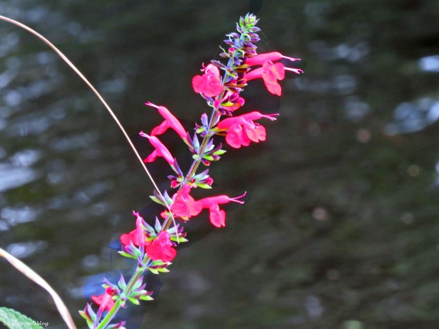 wild flower in McGough Nature Park