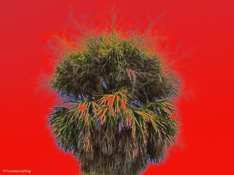 art natural palm hair style vivid