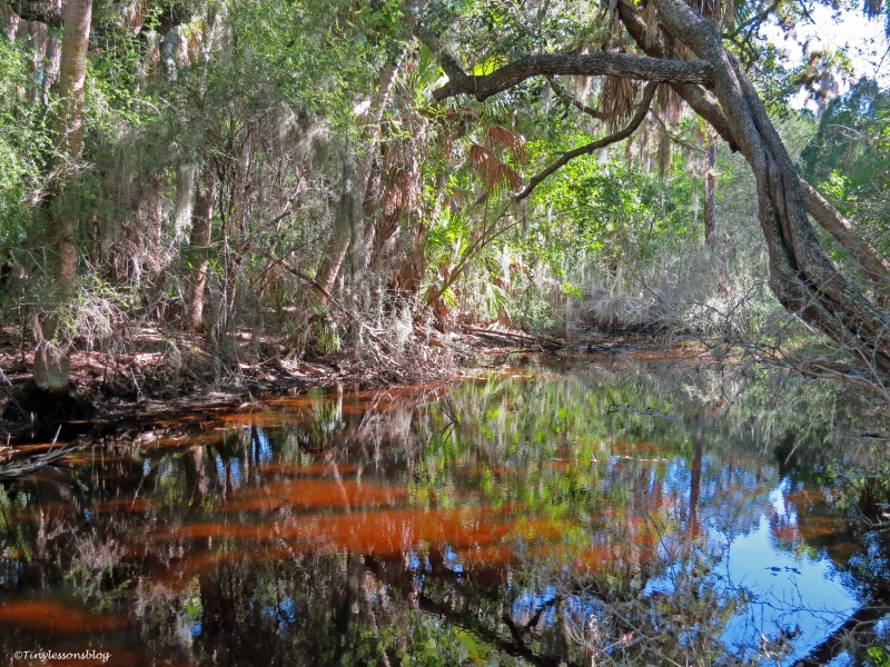 fresh water pond on caladesi island Dunedin Florida