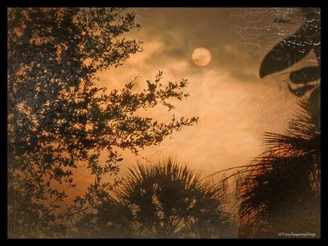sunrise oil painting 4