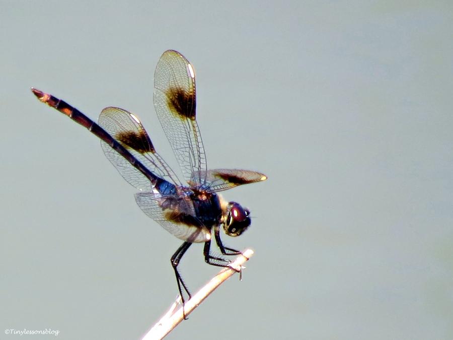 dragonfly 2 UD16