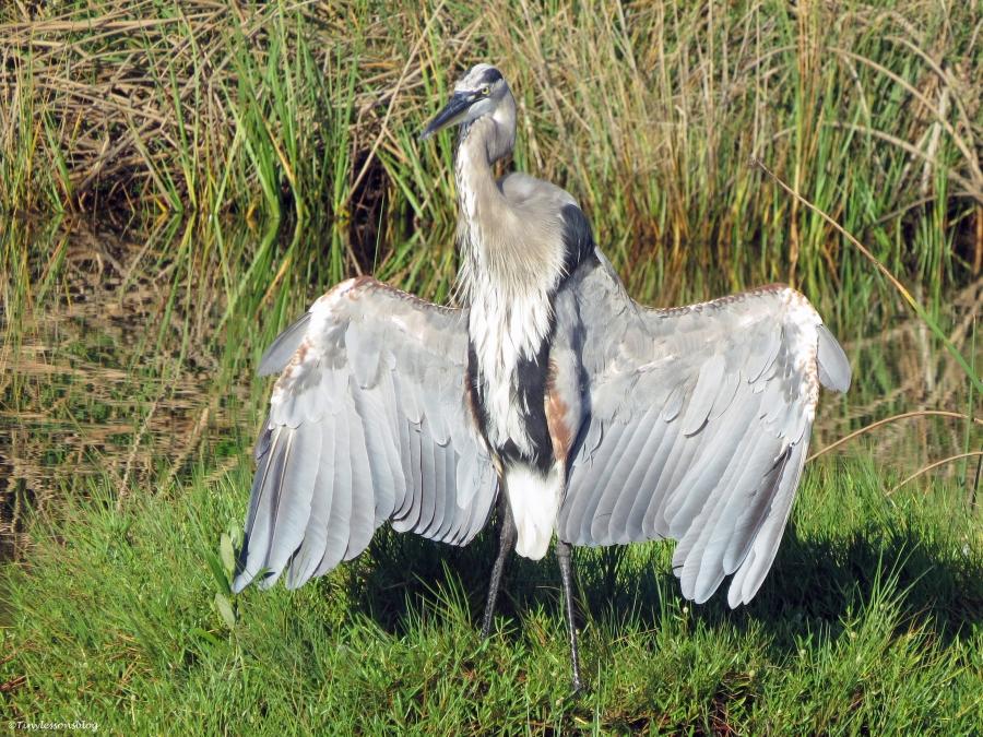 Blue Heron Nature Center