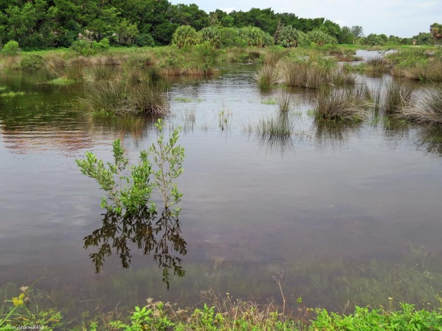 salt marsh under water sand key clearwater Florida